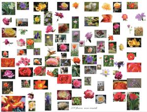 100 Flower Photos, Anne Wasciuk