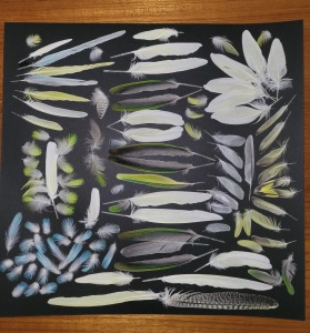 Feathers, Marcy Breslow