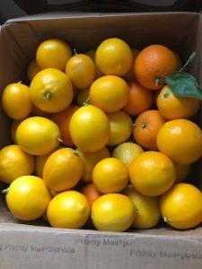 When Life Gives You Lemons, Smilka Zdravkovska.